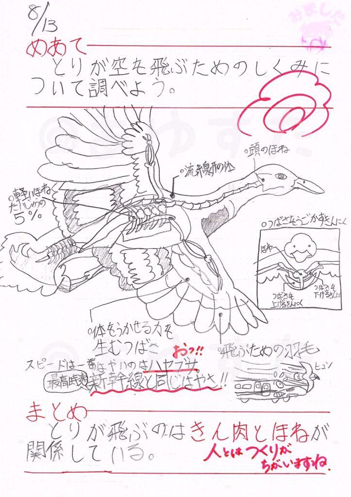 鳥が空を飛ぶための仕組みについての自主学習ノート